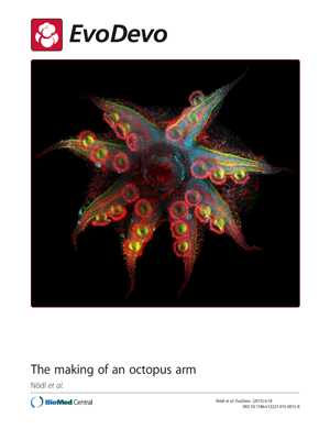 Animal blossoming: Confocal image of Octopus vulgaris hatchling arm crown - DOI 10.1186/s13227-015-0012-8